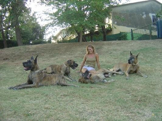 Allevamento la Cala del Leone - Pisa - Allevamento alani : cuccioli di alano - Cuccioli di cane con pedigree